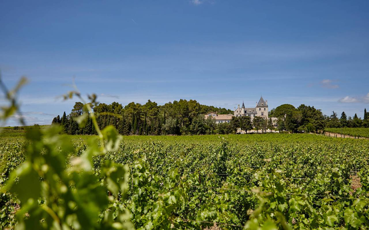 French vines, unusual accommodation Occitanie, Domaine & Demeure